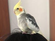 Pássaro exótico imagens de stock