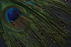 Pássaro exótico Imagem de Stock