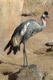 Pássaro exótico grande 1 fotografia de stock