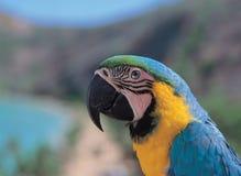 Pássaro Glaring Fotografia de Stock Royalty Free