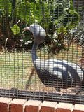 Pássaro grande bonito que aprecia a atenção fotos de stock royalty free