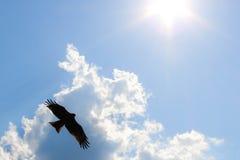 Pássaro grande no céu Imagem de Stock