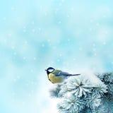 Pássaro (grande titmouse) no tempo de inverno Fotos de Stock Royalty Free