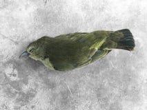 Pássaro inoperante imagens de stock royalty free