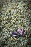 Pássaro inoperante na grama com vinheta Imagem de Stock