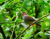 Pássaro, Kuala Lumpur Bird Park imagem de stock