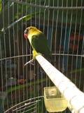 pássaro fotos de stock