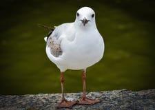 Pássaro modelo Fotos de Stock Royalty Free
