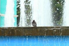 Pássaro molhado Imagens de Stock