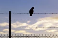 Pássaro mostrado em silhueta no fio Imagens de Stock