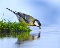 Pássaro na água. Imagens de Stock Royalty Free