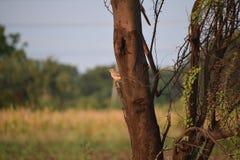 Pássaro na árvore Fotos de Stock Royalty Free