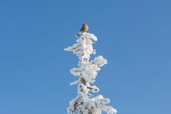 Pássaro na árvore Fotos de Stock