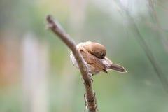 Pássaro na árvore fotografia de stock