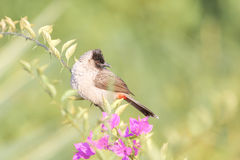 Pássaro na árvore foto de stock