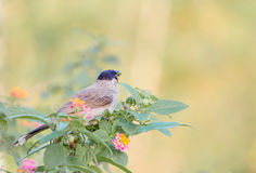 Pássaro na árvore fotografia de stock royalty free