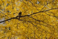 Pássaro na árvore amarela fotografia de stock royalty free
