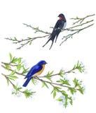 Pássaro na árvore de maçã Ilustrações desenhadas mão Imagens de Stock