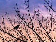 Pássaro na árvore no por do sol Fotografia de Stock Royalty Free