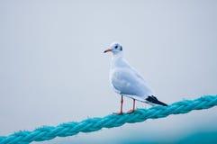 Pássaro na corda Fotografia de Stock