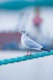 Pássaro na corda Fotografia de Stock Royalty Free