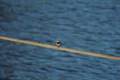 Pássaro na corda foto de stock