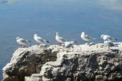 Pássaro na fileira Imagens de Stock