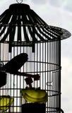 Pássaro na gaiola Fotos de Stock