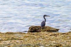 Pássaro na ilha da recompensa em Fiji Fotografia de Stock Royalty Free