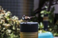 Pássaro na lâmpada Fotografia de Stock Royalty Free