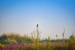 Pássaro na lagoa do pântano do ramo imagem de stock royalty free