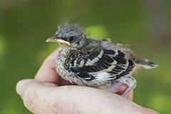 Pássaro na mão imagem de stock