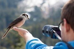 Pássaro na mão dos fotógrafo Fotografia de Stock