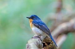 Pássaro na natureza Fotos de Stock Royalty Free
