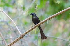 Pássaro na natureza Imagem de Stock