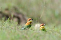 Pássaro na natureza Fotografia de Stock