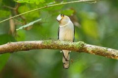 Pássaro na natureza Fotos de Stock