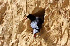Pássaro na parede Imagens de Stock