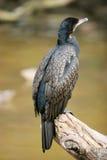 Pássaro na parte de madeira fotografia de stock royalty free