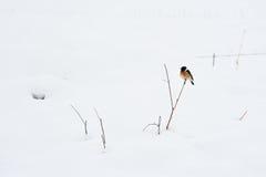 Pássaro na planta na neve do inverno fotos de stock