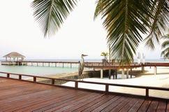 Pássaro na plataforma de madeira, Maldivas da garça-real imagem de stock