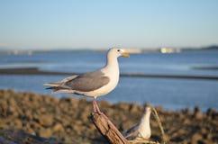 Pássaro na praia Fotografia de Stock