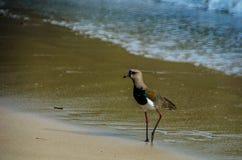 Pássaro na praia Foto de Stock Royalty Free