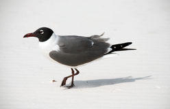 Pássaro na praia Imagem de Stock