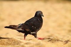 Pássaro na praia Porto Rico da areia imagens de stock