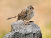 Pássaro na rocha Fotografia de Stock