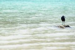 Pássaro na rocha Imagem de Stock