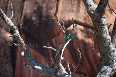 Pássaro na rocha de Ayers imagem de stock