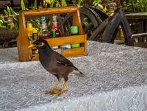 Pássaro na tabela Imagens de Stock