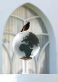 Pássaro na terra de vidro fotografia de stock royalty free